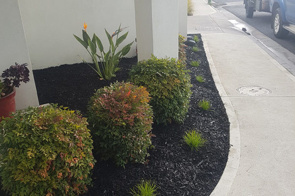 black mulch garden